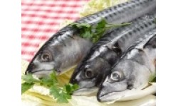 Fresh Mackerel Whole – 400g – 600g